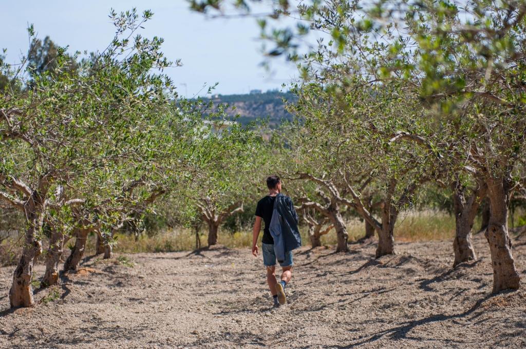 olijfolie langer leven