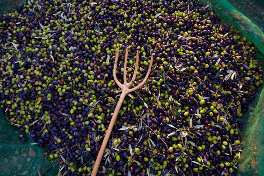 biologische-olijfolie